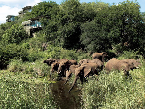 Classic South Africa in Style - Waterhole game viewing