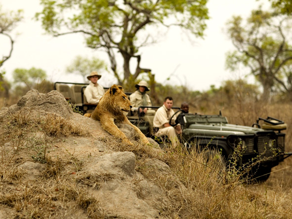 Classic South Africa in Style - Big 5