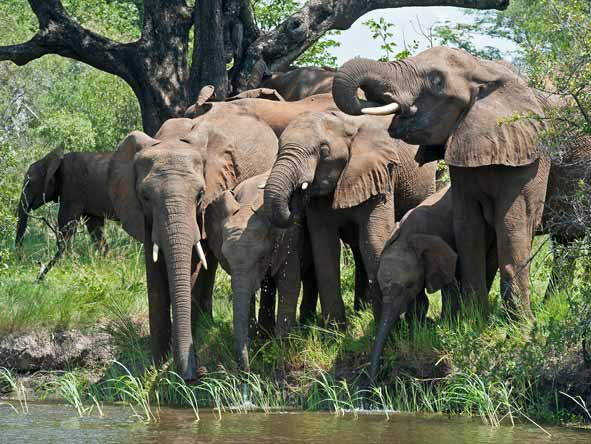 Botswana Summer Encounter - Chobe elephants