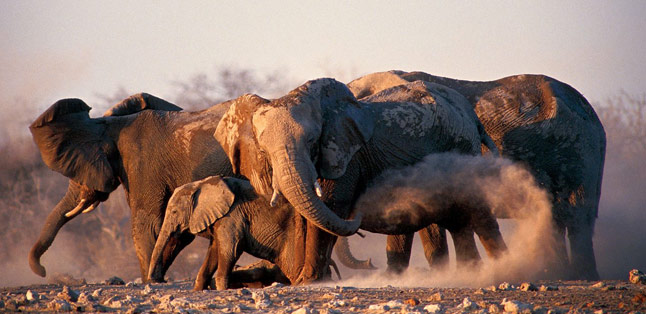 Etosha National Park - discover a magical place in Namibia
