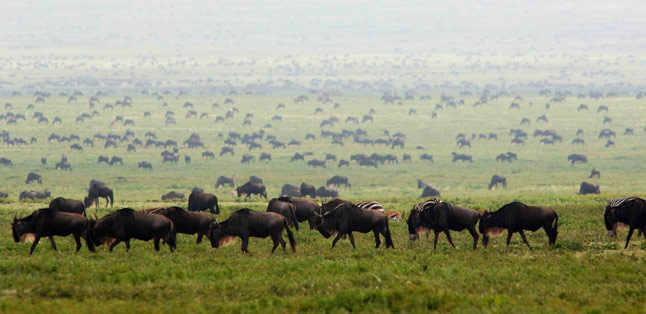 Serengeti National Park - Tanzania's savannah of life and death