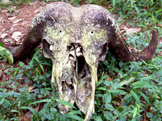 Kenya Travel Diary - a lonely skull on the plains