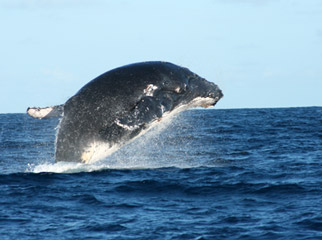 Vamizi Island Lodge - whale watching