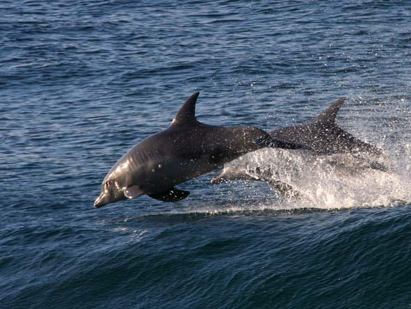 Dolphins are very often seen skimming the waves in the bay - be sure to look out for them!