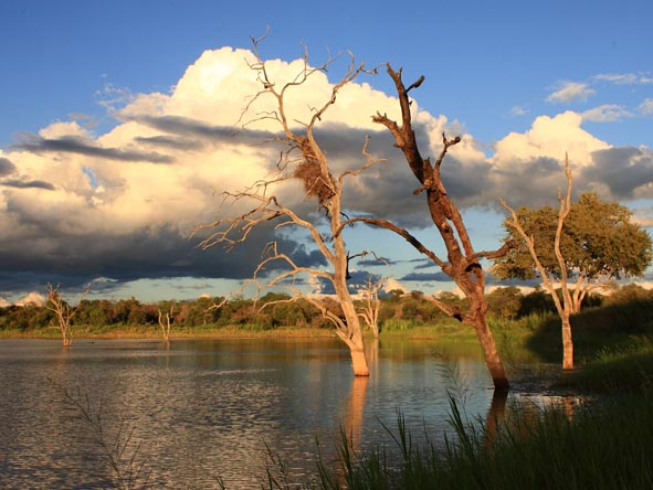 During the rainy season, rivers and waterholes in the Timbavati swell their banks.