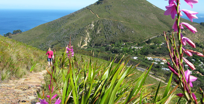 How to Hike Africa's Iconic Mountains - the mountain is home to many different plant species