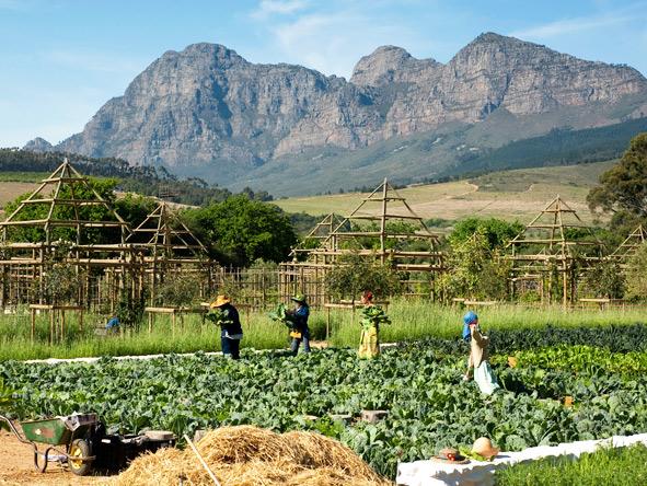 Babylonstoren - Garden-fresh produce