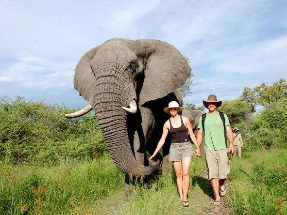 Stanleys Camp - Elephant walking