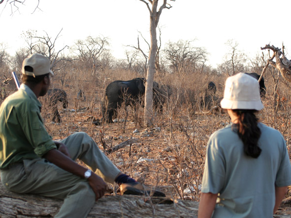 Muchenje Safari Lodge - Walking safaris