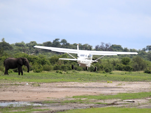 Savute Elephant Camp - Fly-in safari