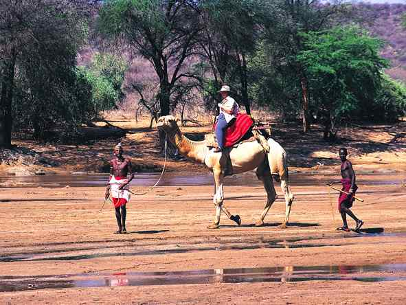 Samburu Intrepids - Camel-backed safaris