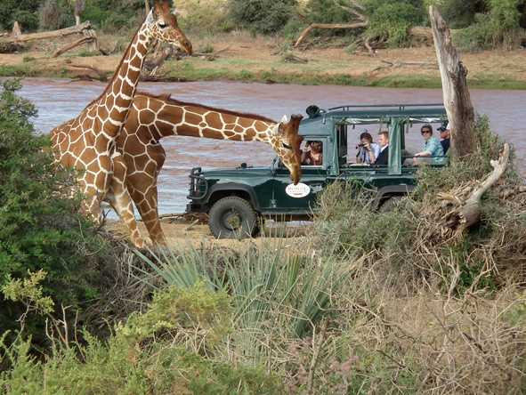 Samburu Intrepids - Unusual wildlife
