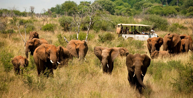 Christmas in Africa - A game drive at Morukuru in Madikwe