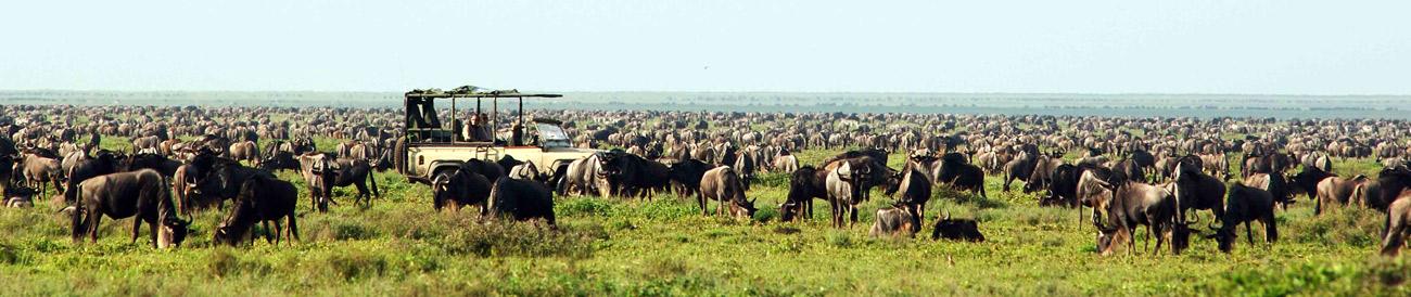 Serengeti Safari Experience