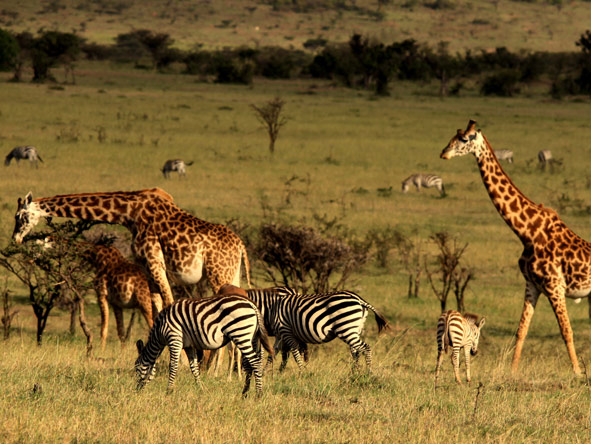 Mahali Mzuri - Year-round safari destination