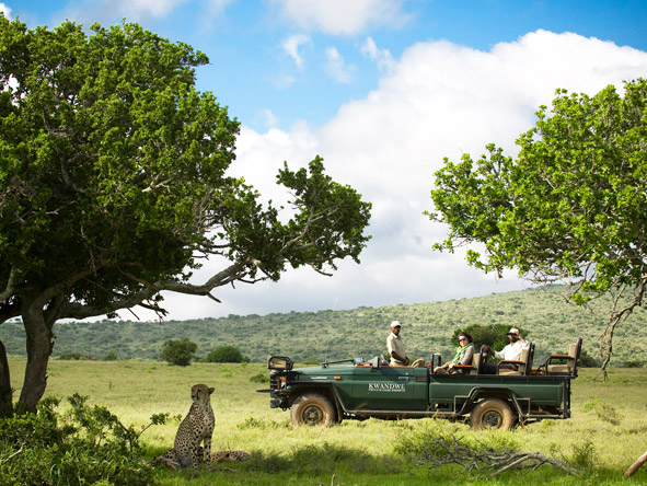 Iconic South Africa: Cape & Garden Route Safari - Cheetahs