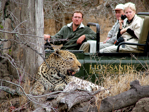 Marvelous Cape Town & Kruger - Leopard sightings