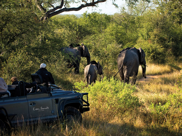 Marvelous Cape Town & Kruger - Off-road game viewing