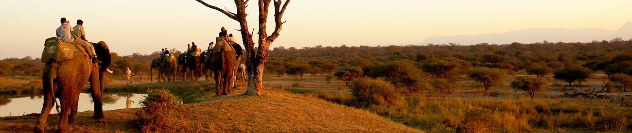 South Africa's Spectacular Nature Experience