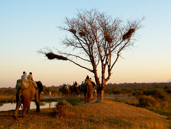 South Africa's Spectacular Nature Experience - Big 5 reserves