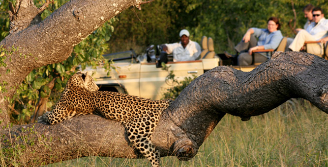 A Guide to Your First South African Safari - Kruger leopard
