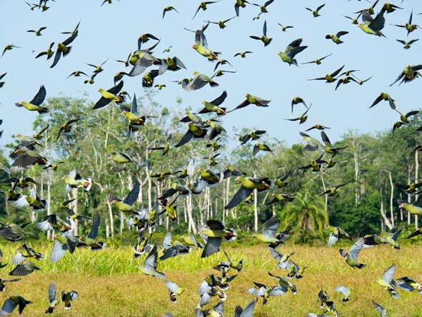 Lango Camp - Birder's paradise