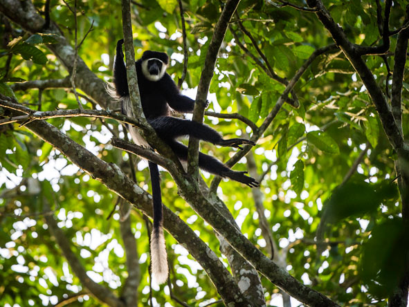 Lango Camp - Primate-spotting walks