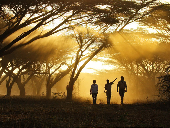 Adamson's Footsteps Kenya Explorer - Guided walks
