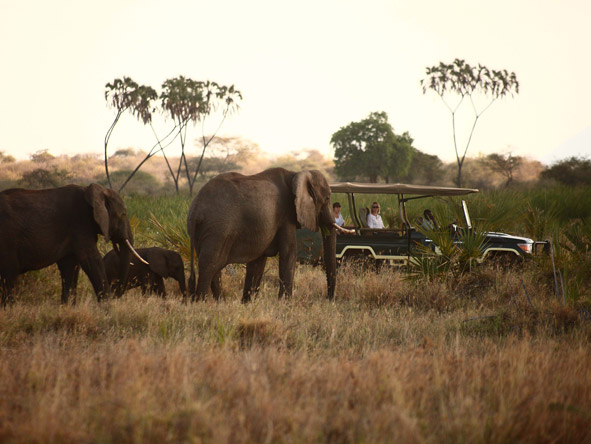 Adamson's Footsteps Kenya Explorer - Distinctive game reserves