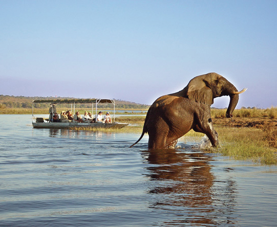 Chobe is big game country & home to Africa's greatest remaining population of elephants.
