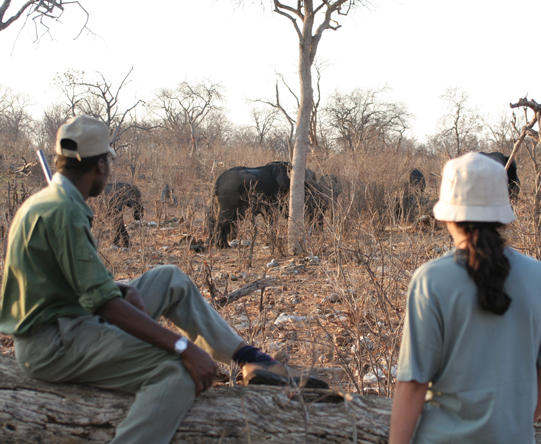 Guided walks in private Chobe concessions bring you closer to nature than you imagined!
