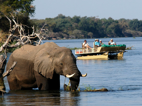 With so many animals at the water's edge, much of the game viewing in the Lower Zambezi is done by boat.