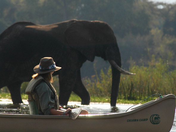 Zambezi canoe safaris allow you to get closer to animals than in a vehicle - prepare for thrilling close-ups!