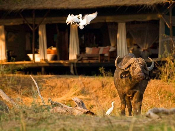 Lower Zambezi lodges overlook water, attracting animals throughout the day & making for easy game viewing.
