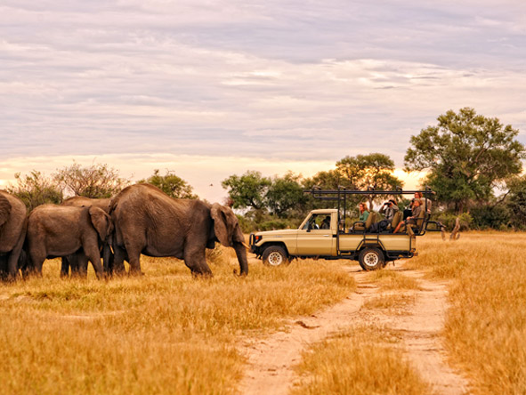Day & night game drives reveal just why Mana Pools has long been a top safari destination.