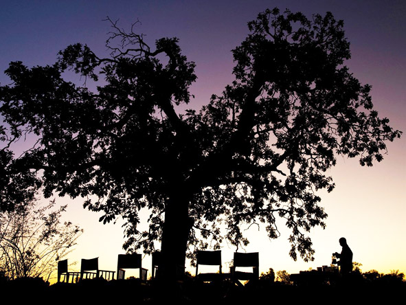 Sunset drinks under an enormous spreading tree often end the day on a South Luangwa safari.