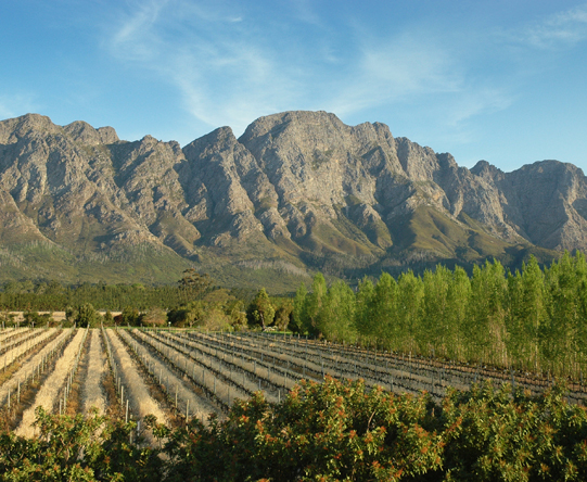 The idyllic Cape Winelands make a suitably scenic destination for a fairytale honeymoon.