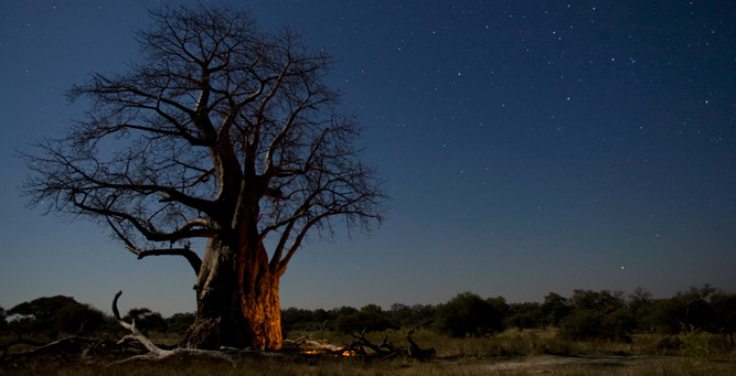 How to Shoot African Landscapes - baobab under the stars