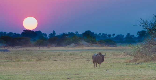 How to Shoot African Landscapes - wildebeest at dusk
