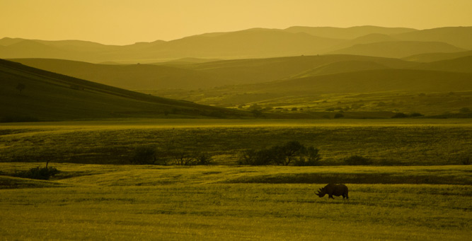 How to Shoot African Landscapes - introducing the rhino