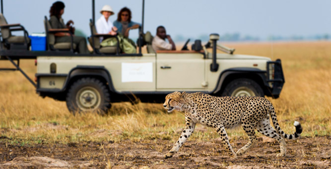 Things to Do in Zambia - a cheetah on the Busanga Plains
