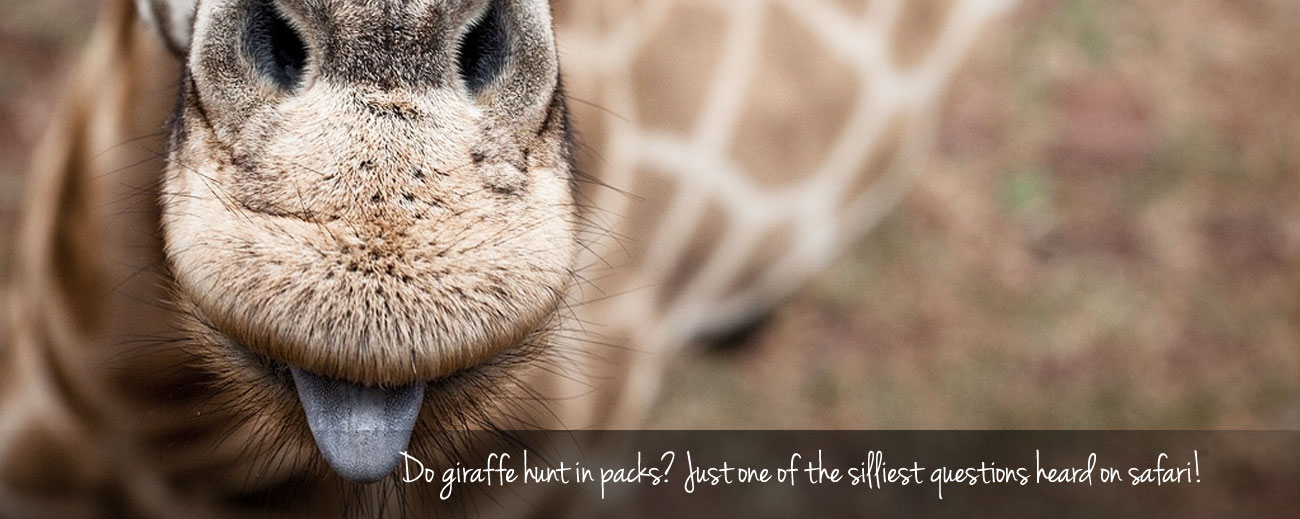10 Silly Questions Heard on Safari
