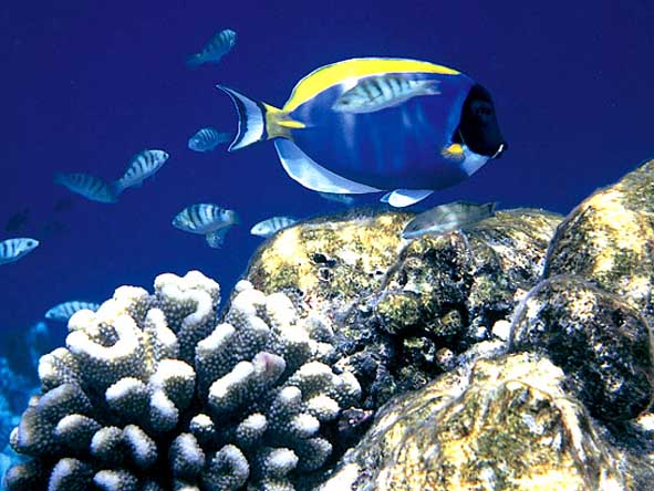 Several of our recommended destinations lie in or near marine reserves, offering superlative diving.