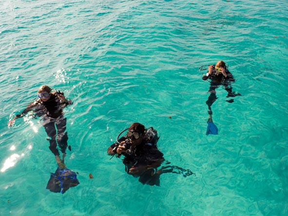 Learn how to dive in Africa: the conditions are excellent & you can reward yourself with a safari afterwards!