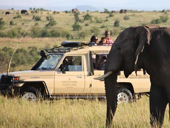 Most of our affordable safaris feature game drives in open-sided 4X4s - ideal for close-up photography.