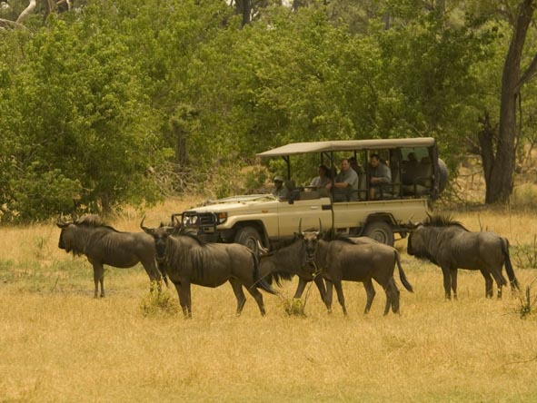 Catch the Masai Mara/Serengeti migration on an affordable safari - ask us for recommendations.