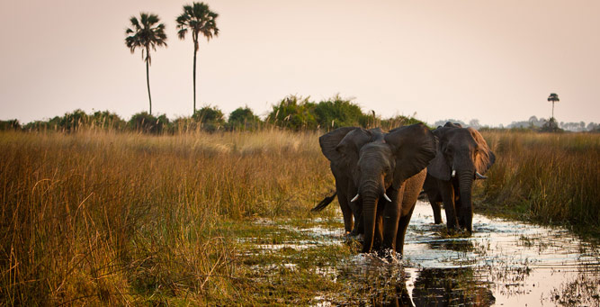 Top Tips on Photographing the Big 5 - elephants