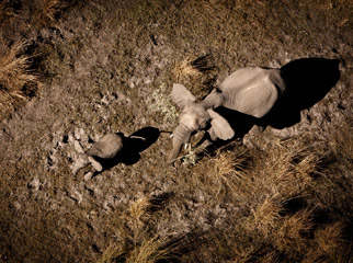 Top Tips on Photographing the Big 5 - elephants from the air