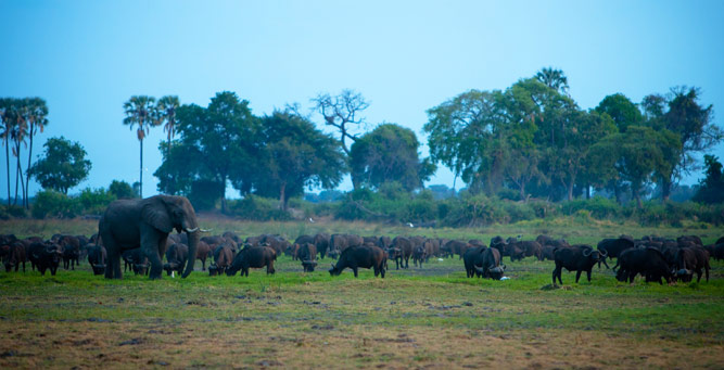 Top Tips on Photographing the Big 5 - buffalo herd