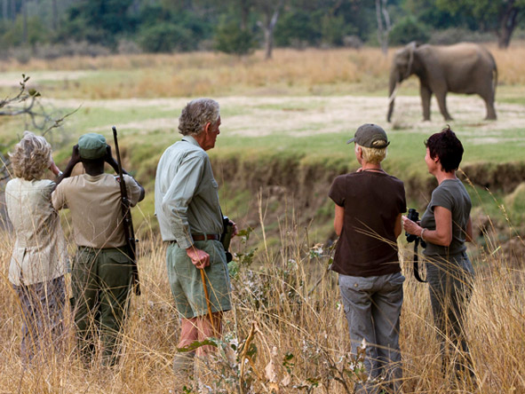 Walk the South Luangwa - Walking safaris